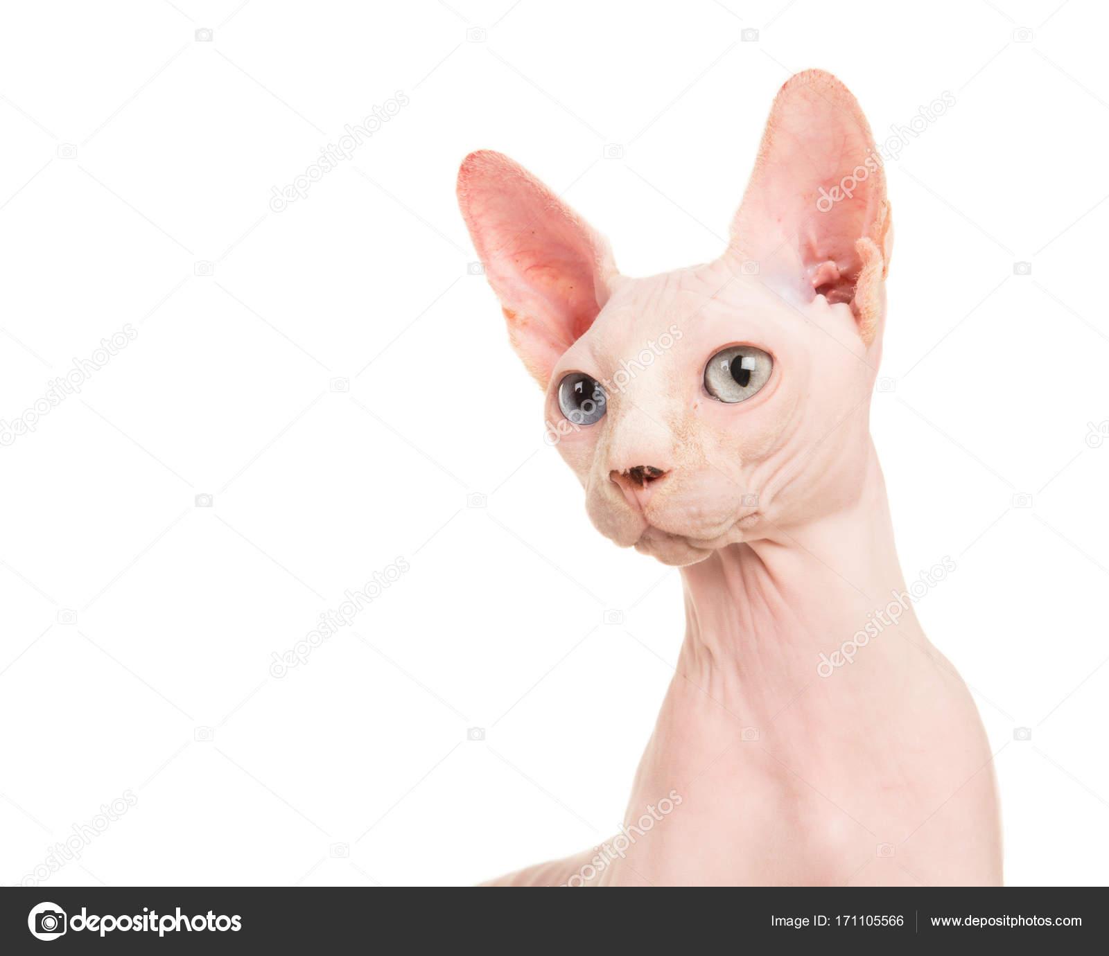 Docela bezsrstá kočička