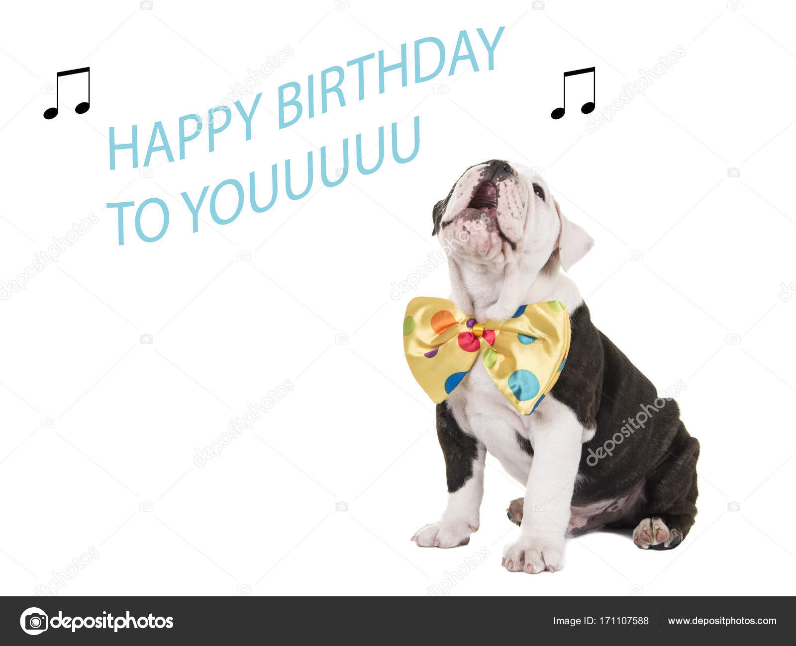 Joli Bulldog Anglais Chiot Assis Et Chanter Joyeux Anniversaire Vous