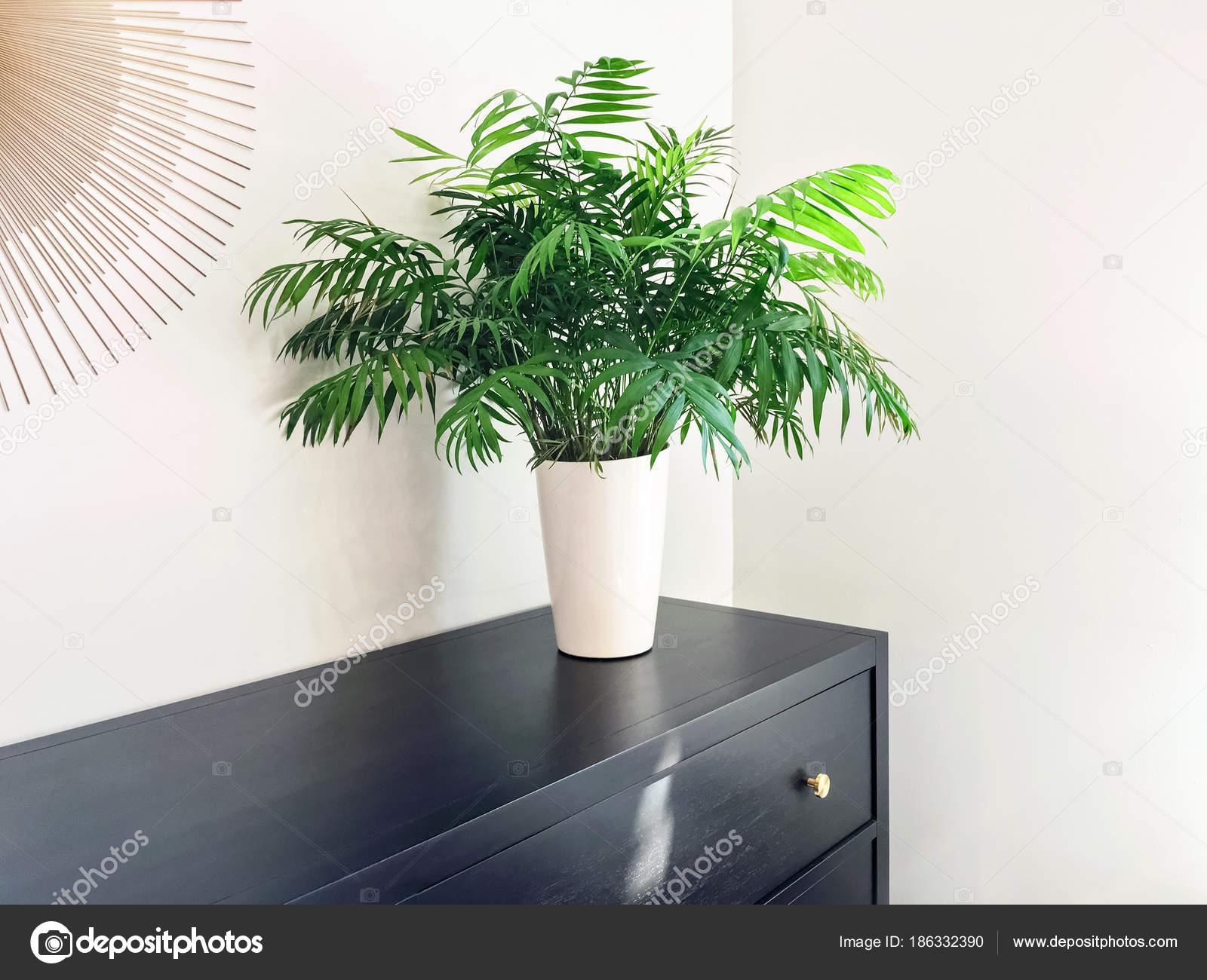 Salon Palme Pflanze Dekoration schwarz Holz Kommode — Stockfoto ...