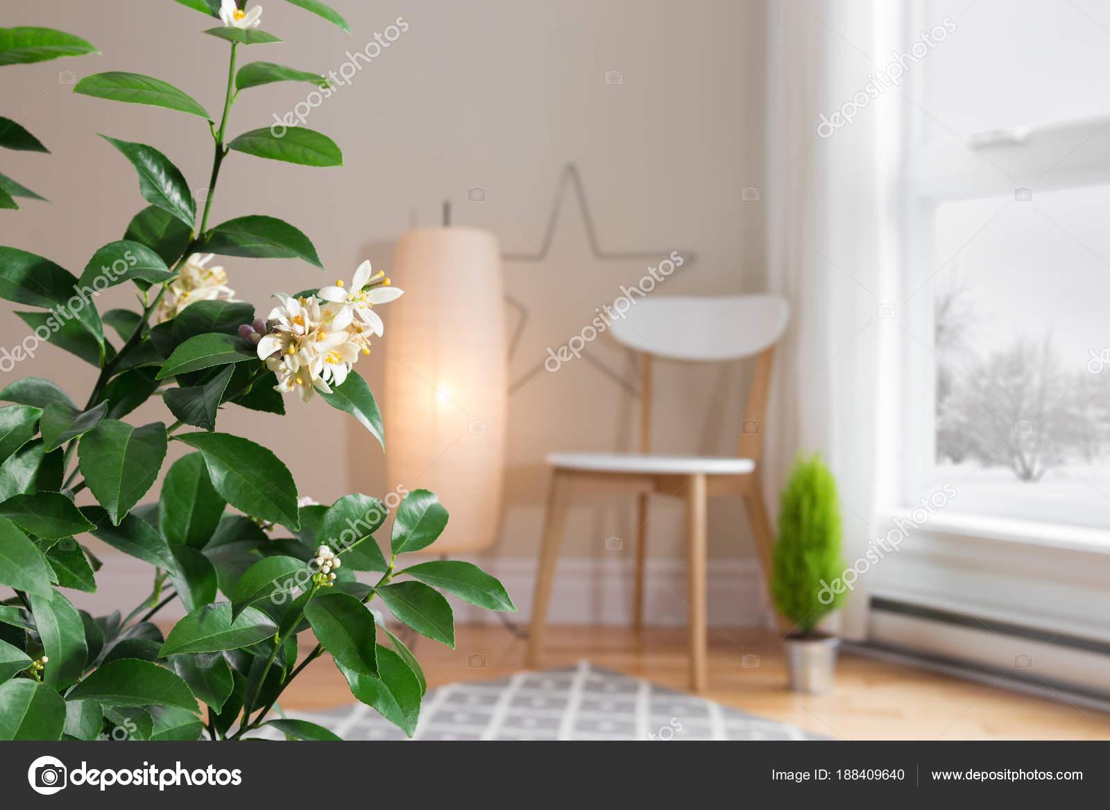 Boom In Woonkamer : Blooming citroen boom in een gezellige woonkamer met uitzicht