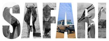 African safari letters concept with animals over white