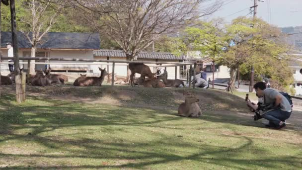 Nara, Japan - April 4,2020 : Deers lay in grass Kofukuji Pagoda while tourist take photos. Tourism affected by covid-19 pandemic.