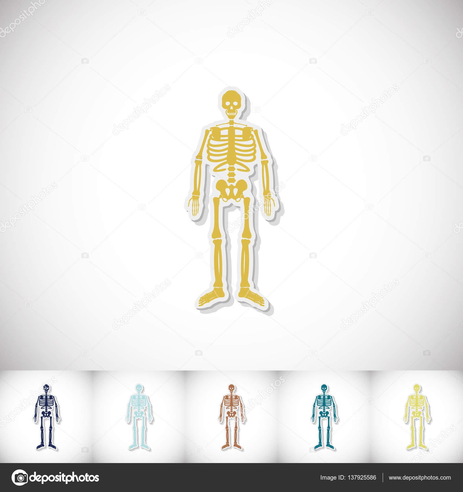 Esqueleto humano. Etiqueta engomada de la plana con sombra sobre ...