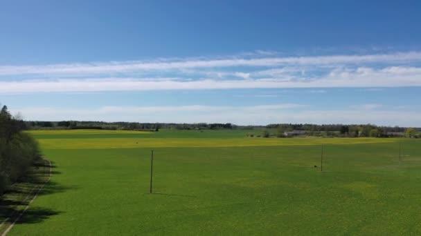 Krásná panoramatická letecká fotografie z létání dronu na Meadow s pampeliškami za slunečného dne. Pampelišky na jaře. Kvetoucí pampelišky zblízka. Krásné pampeliškové pozadí shora. řada