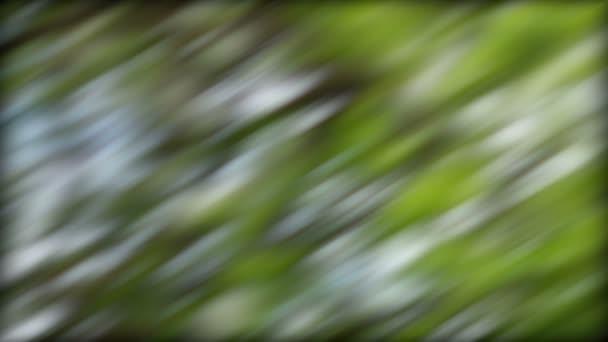 abstraktní zelené pozadí
