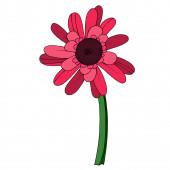 Vettore Gerbera fiore botanico floreale. Incisa in bianco e nero