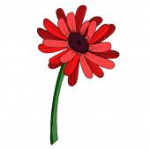 Gerbera vektor virágos botanikai virág. Fekete-fehér vésett