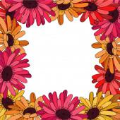 Vektor Gerbera květinová botanická květina. Černobílý rytý