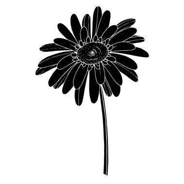 Vektör Gerbera çiçekli botanik çiçeği. Siyah ve beyaz oymalı