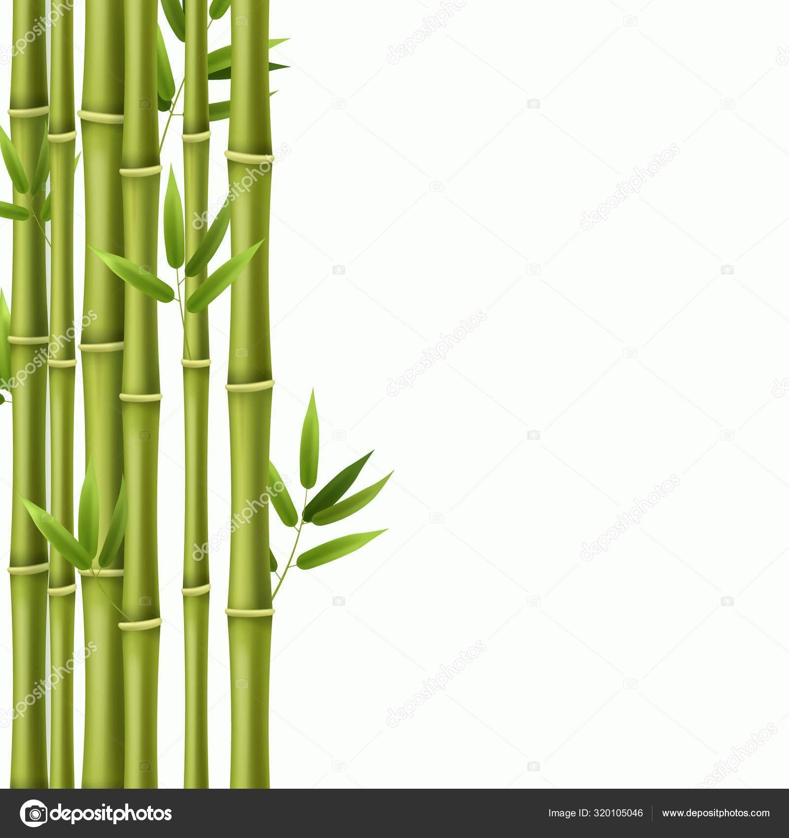 datování bambus