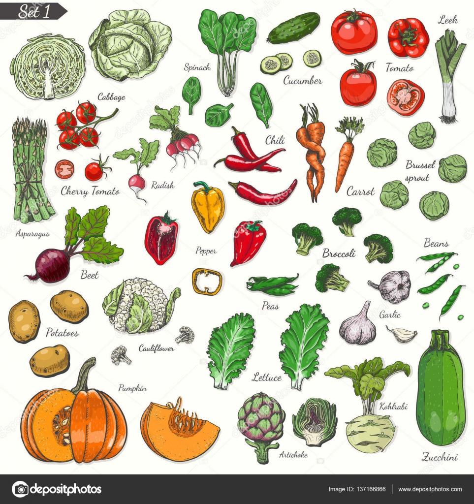 verduras y hortalizas nombres