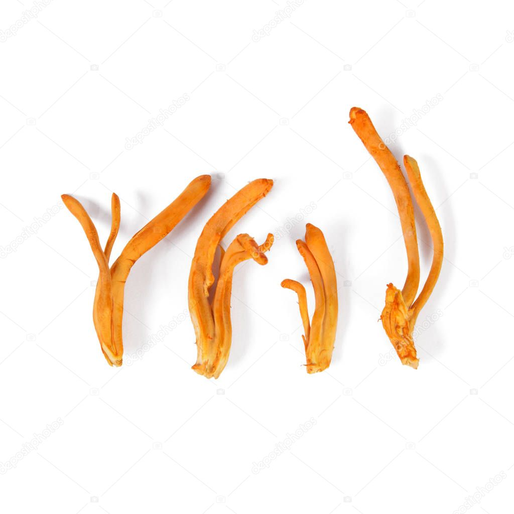 Fresh Cordyceps mushroom used in traditional Chinese
