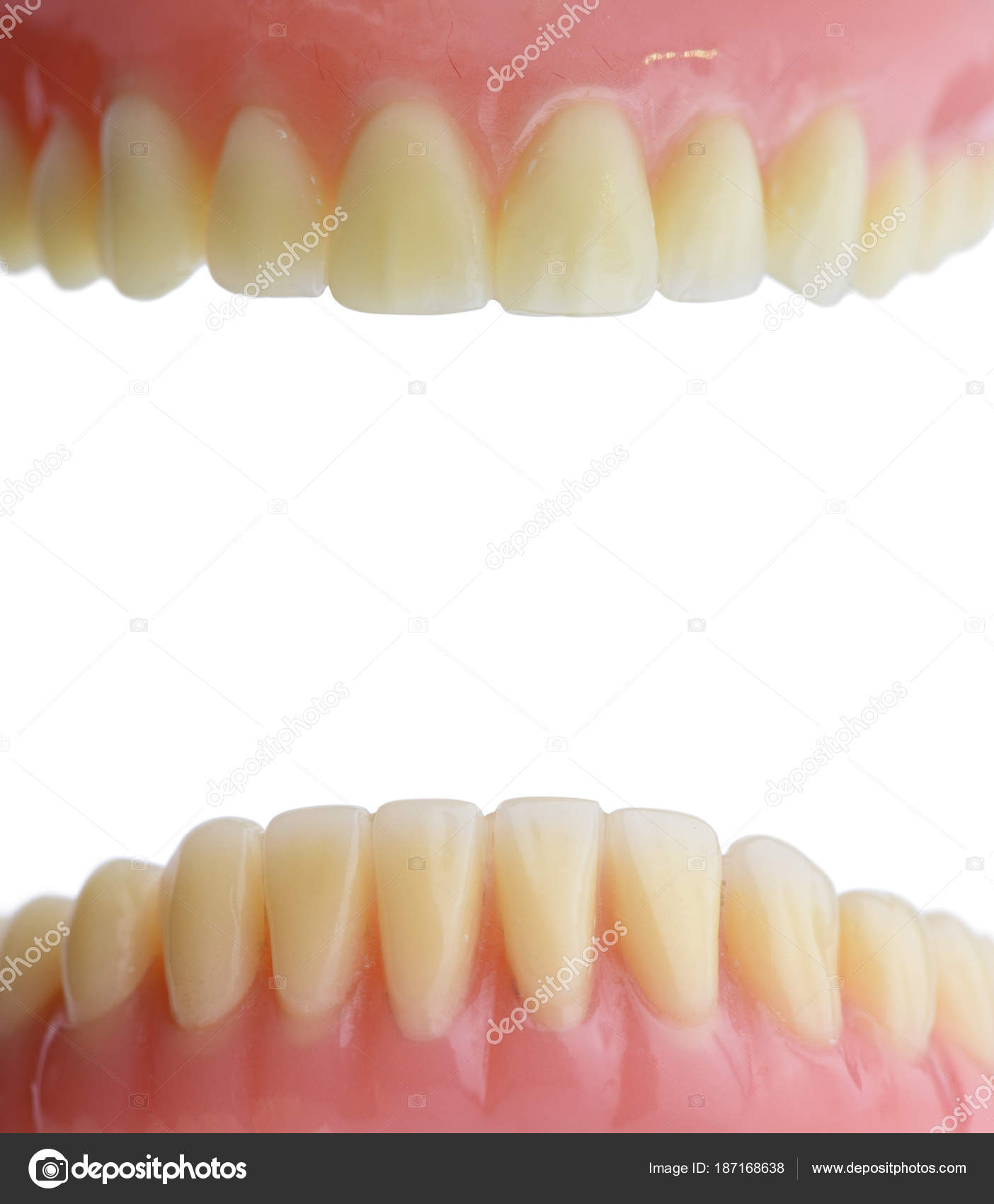 Teeth Gum Human Mouth Anatomy Isolated White Background — Stock ...