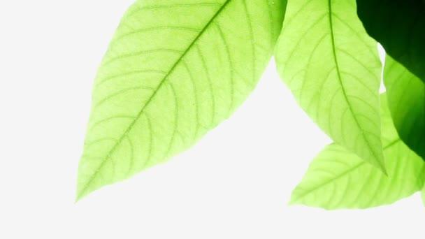 abstrakte Bewegung der grünen Blätter auf weißem Hintergrund