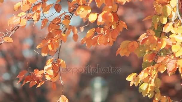 List pádu v podzimní městského parku. Krásné pozadí