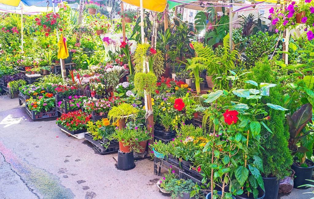 The gardeners' goods in Tbilisi Flower market
