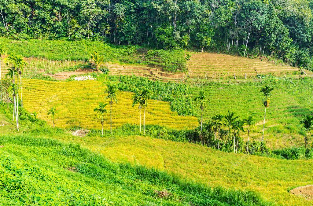 Terraced fields in Sri Lanka