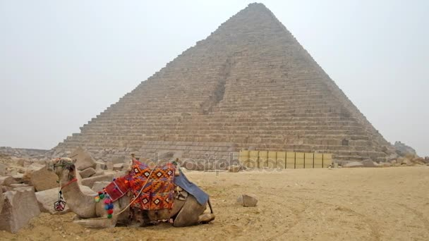 The camel sits on the sand next to the ancient Pyramid of Menkaure in Giza Necropolis, Cairo, Egypt.