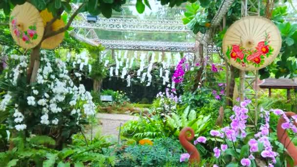 CHIANG MAI, THAILAND - 7. května 2019: Orchidej zahrada s malebnými orientálními deštníky a vodopádem na pozadí, Rajapruek park, 7. května v Chiang Mai Chiang Mai