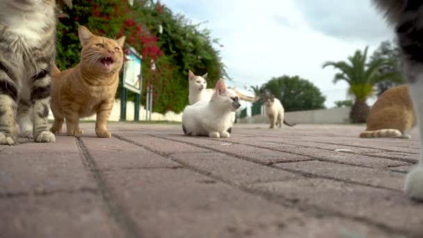Zbloudilé kočky na ulici. Kočky různých plemen běhají po ulici. Kočky jdou ke kameře