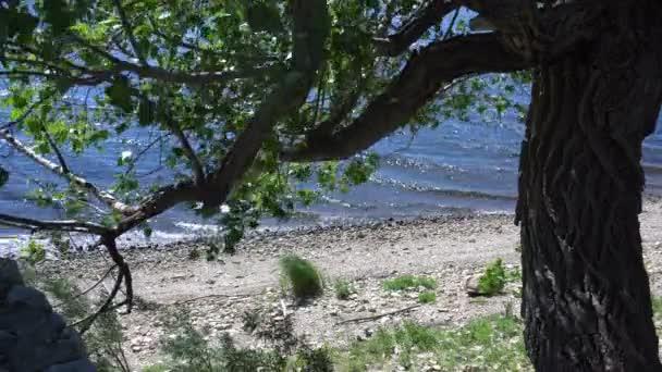 Ein Baum am Flussufer bei sehr windigem Wetter