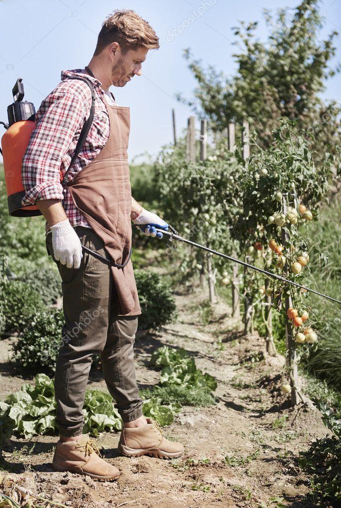 man farmer on his field