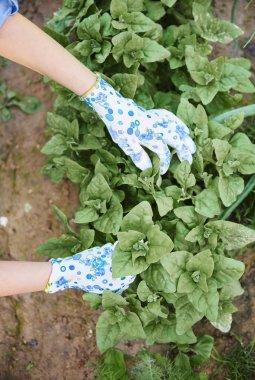 woman Gardening plants