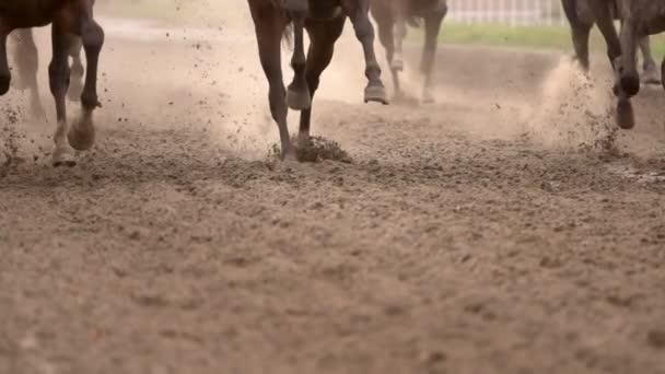 Stádo koní zvedá prach. Pomalý pohyb