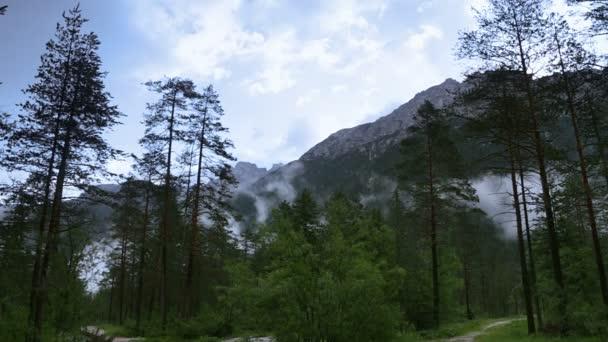 Mlha nad lesní údolí. Rychlý pohyb