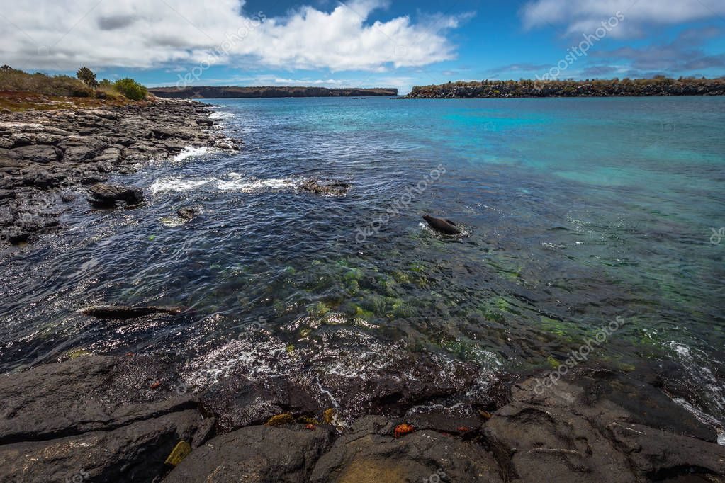 Galapagos Islands - August 24, 2017: Wildlife of the coast of Plaza Sur island, Galapagos Islands, Ecuador