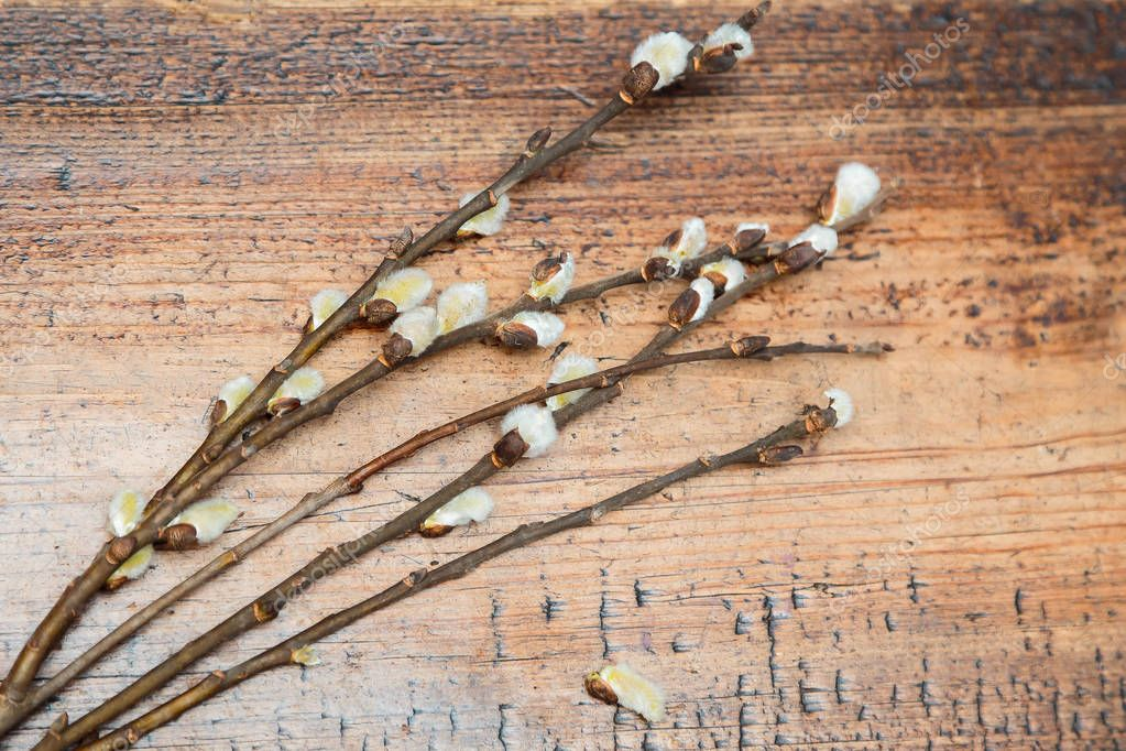 on a wooden background a bouquet of branches of flowering fluffy willow