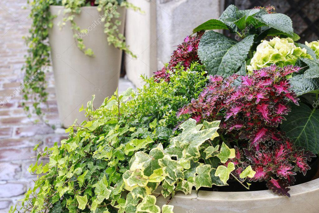 Decorazioni da giardino con le piante verdi — Foto Stock © agneskantaruk #126137654