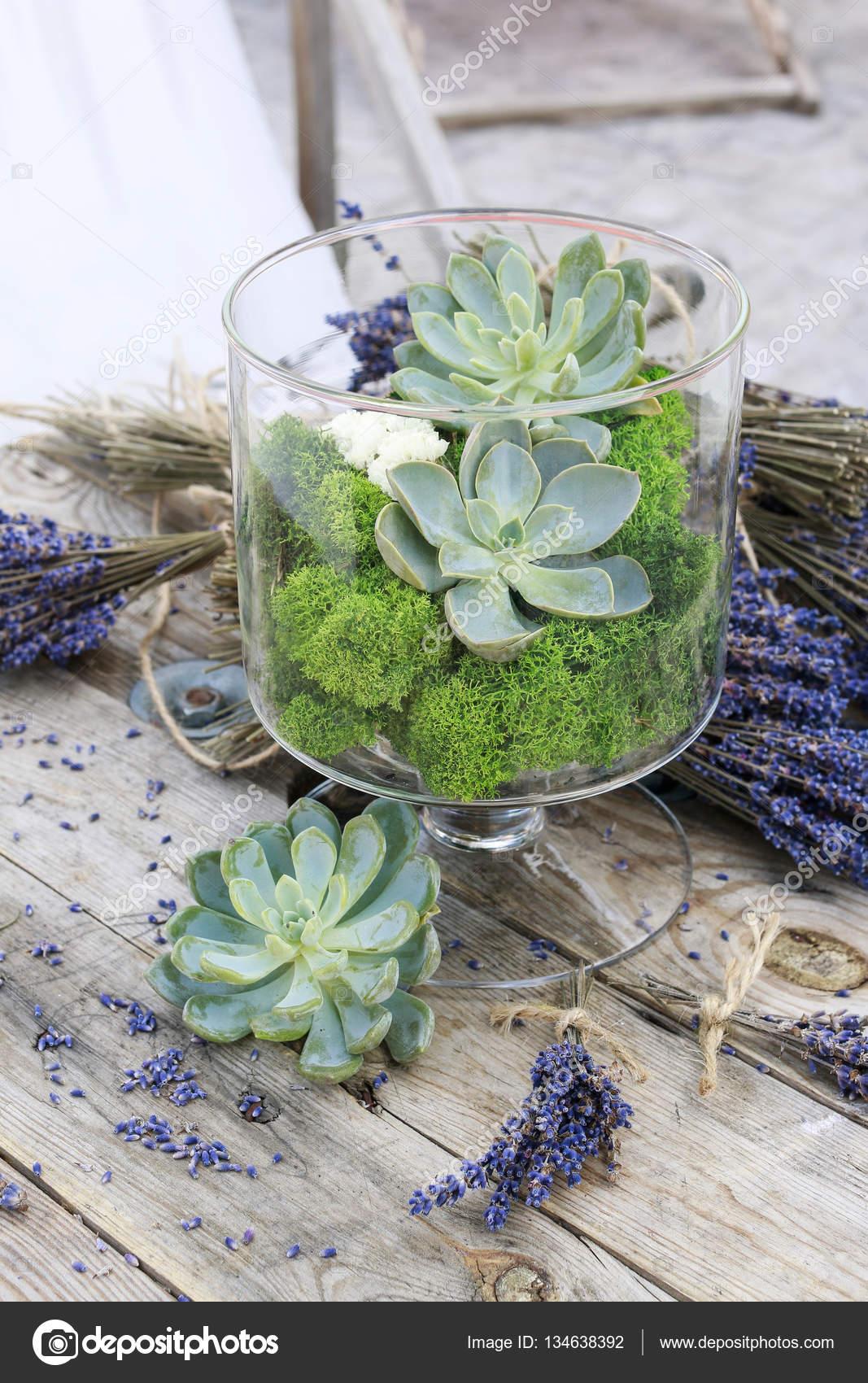Composizione Piante Grasse In Vaso Di Vetro.Piante Grasse Echeveria E Muschio In Vaso Di Vetro Foto Stock
