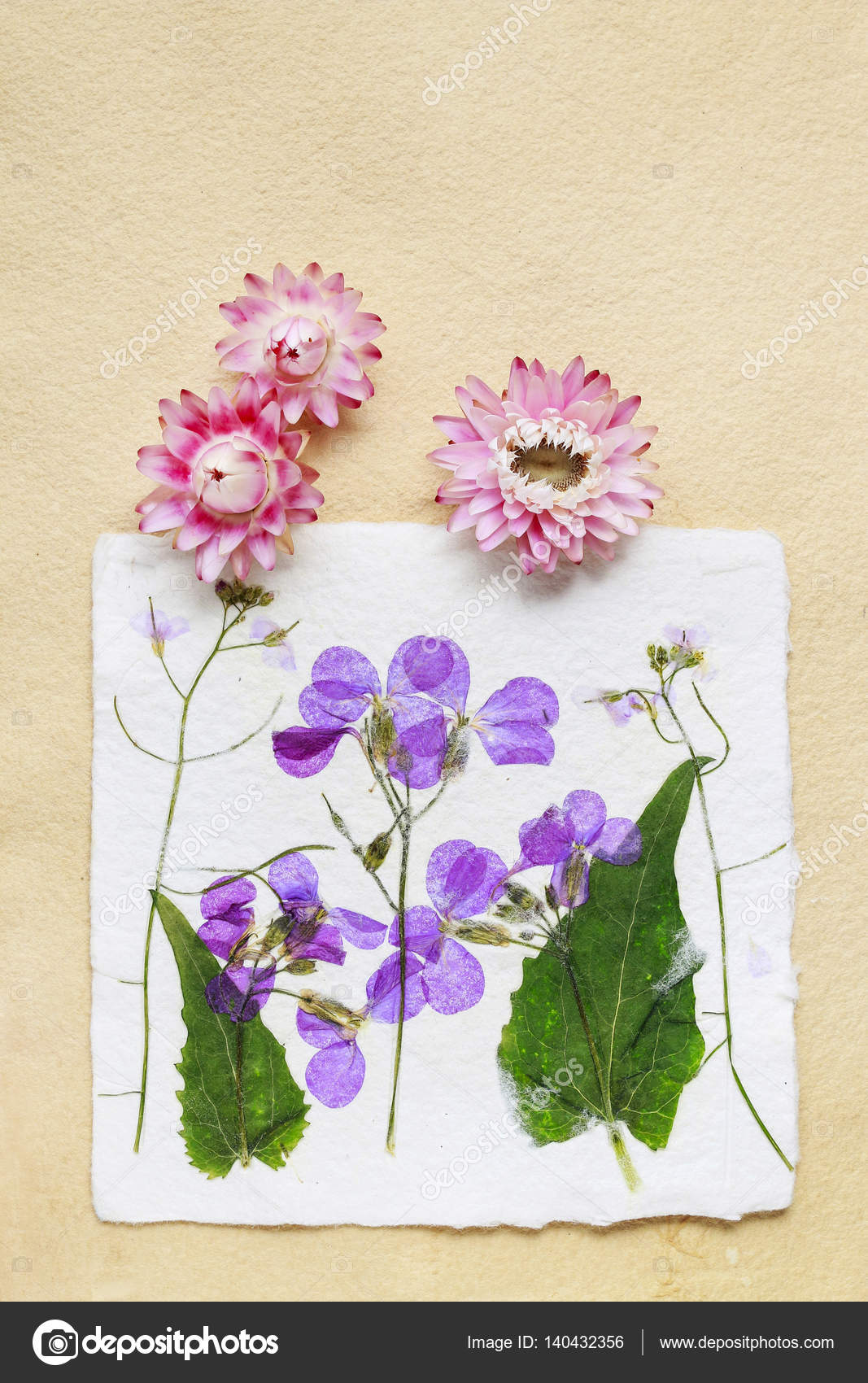 Dried Pressed Flowers On Vintage Paper Background Stock Photo