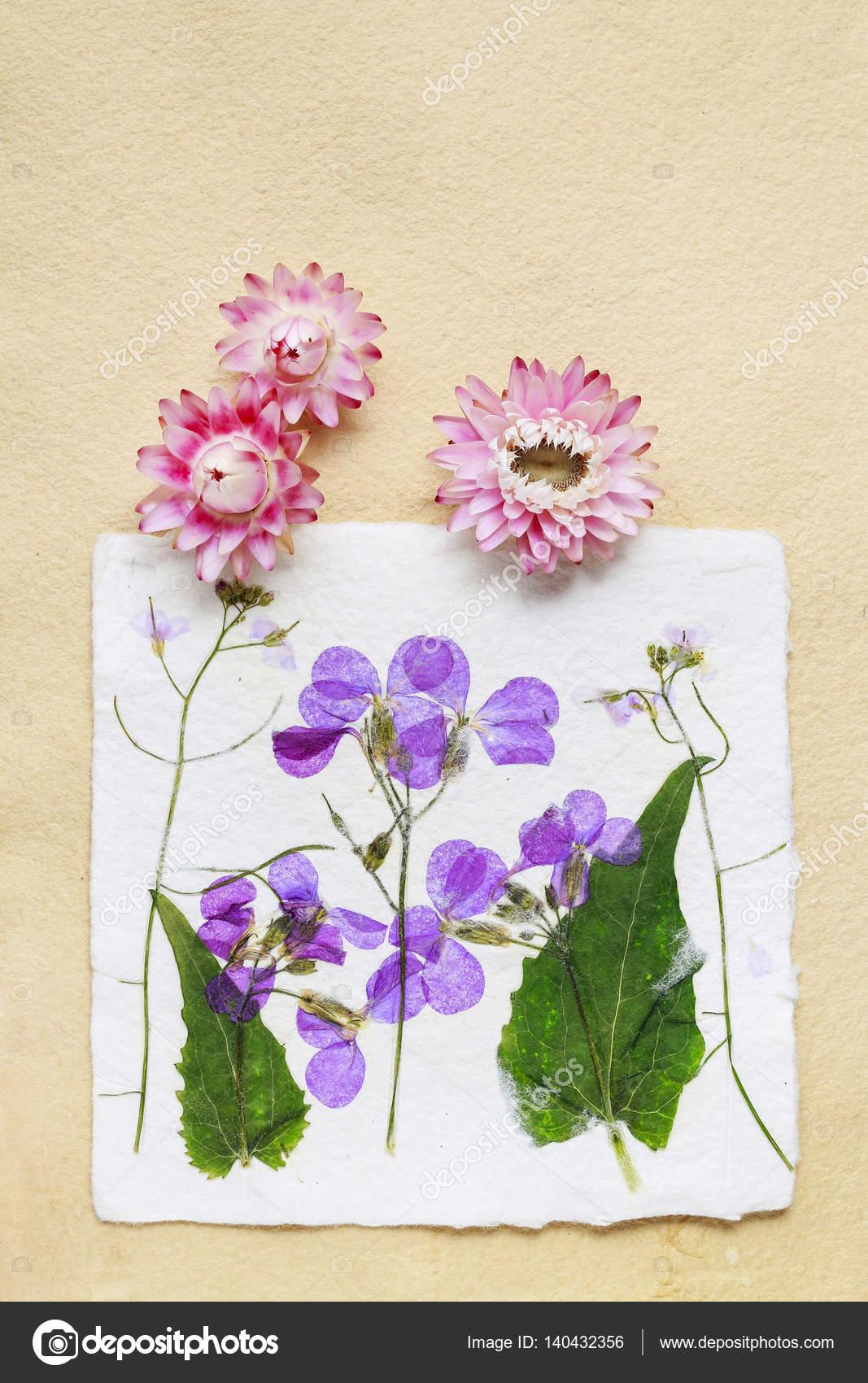 Dried pressed flowers on vintage paper background stock photo dried pressed flowers on vintage paper background stock photo mightylinksfo