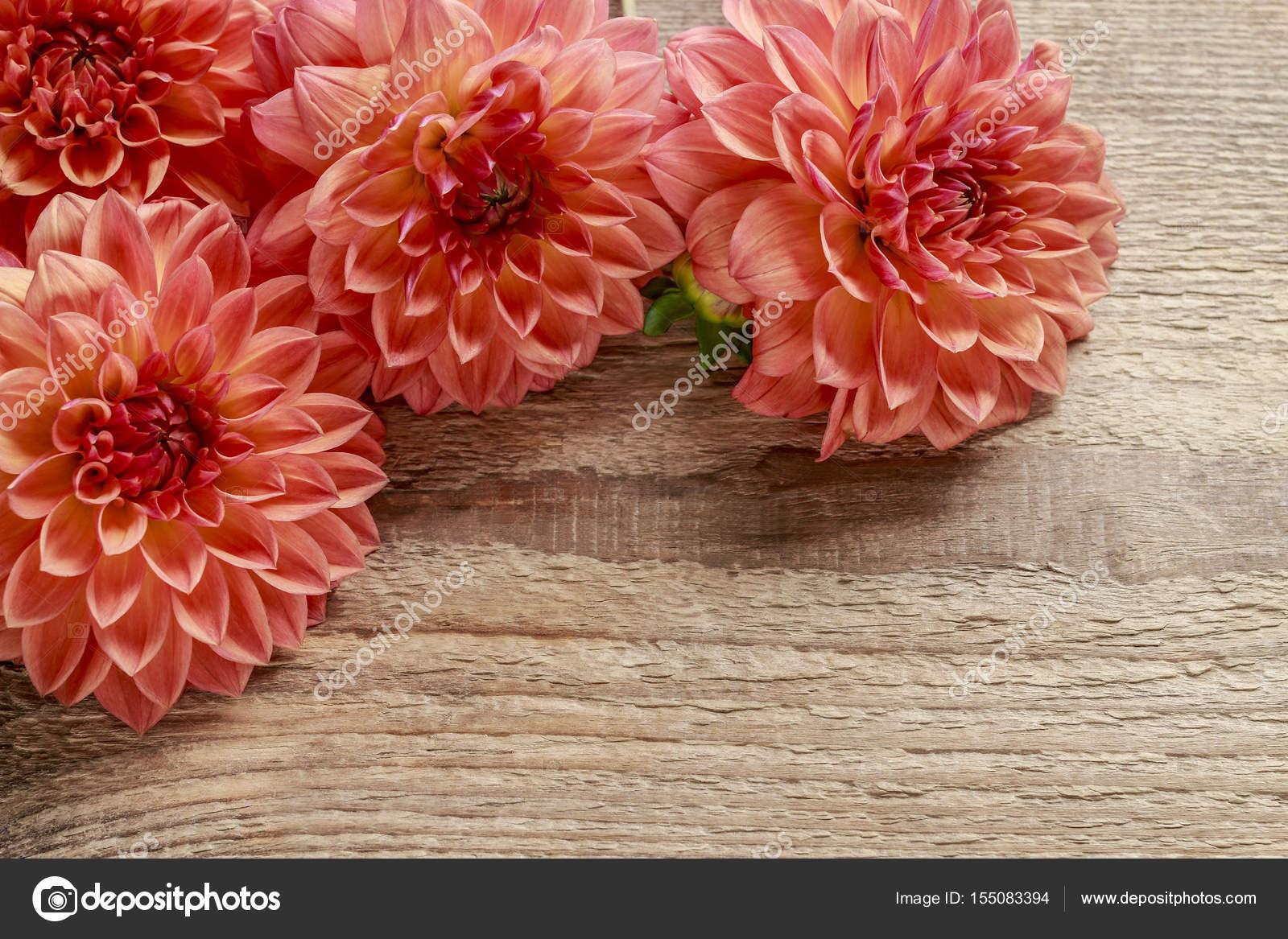 Orange Dahlia Flowers On Wood Stock Photo Agneskantaruk 155083394
