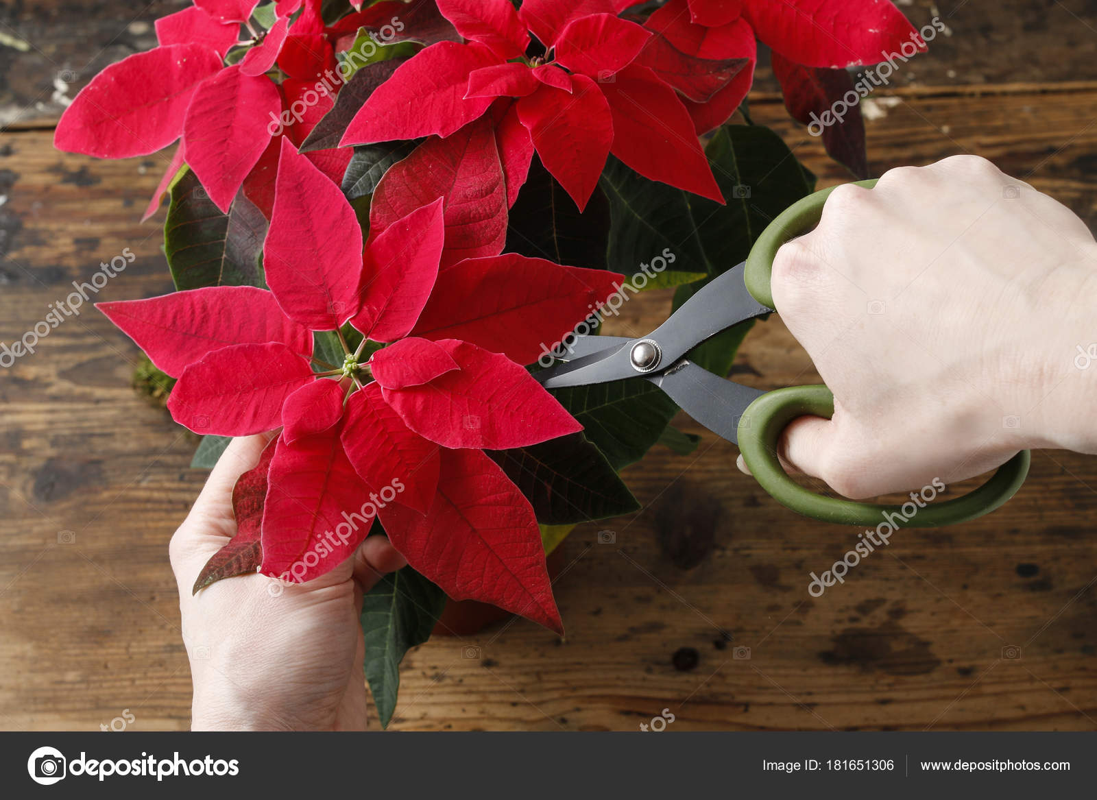 How to make christmas table decoration with red poinsettia flower and moss ball.