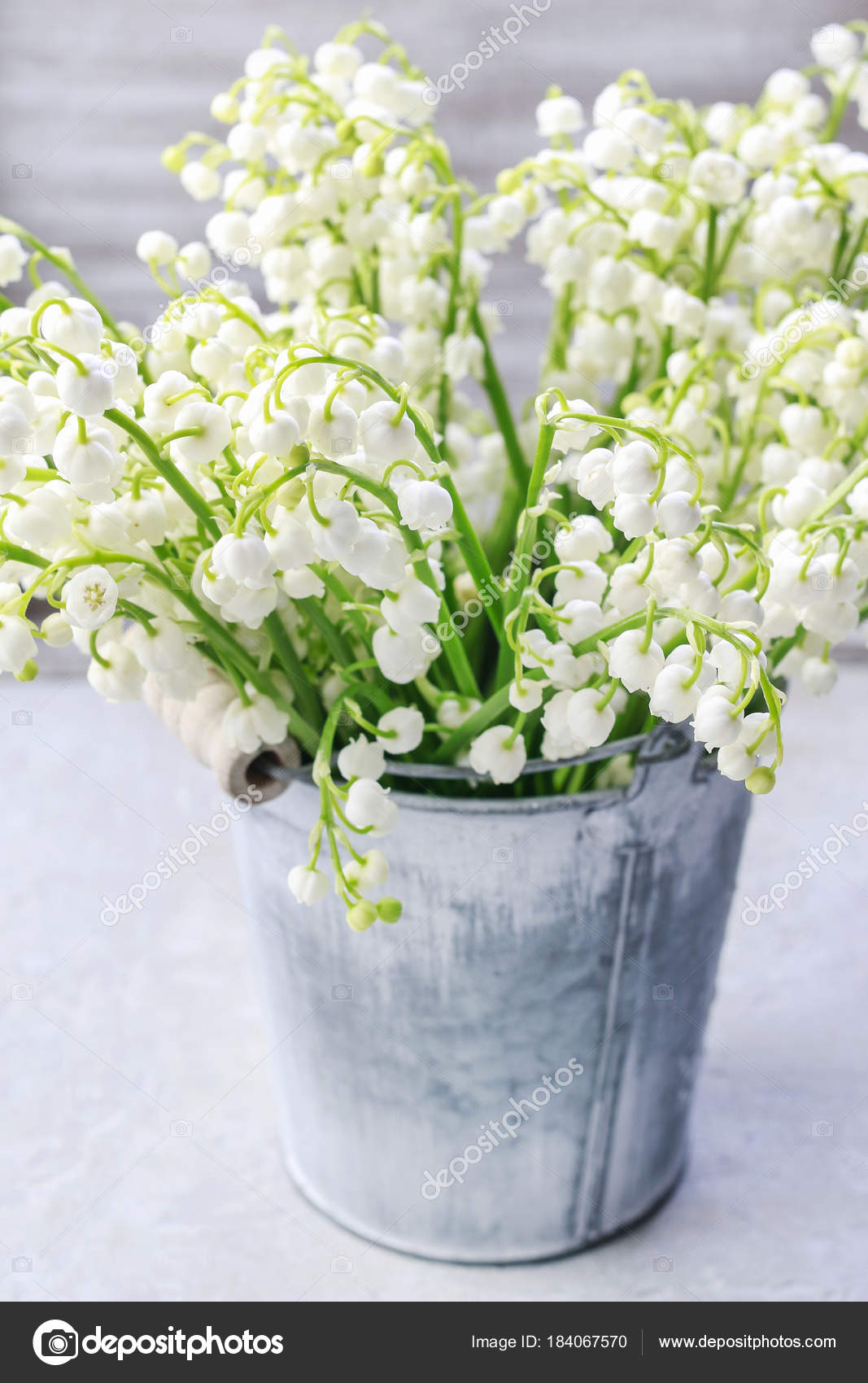 Lilly of the valley flowers in silver bucket stock photo lilly of the valley flowers in silver bucket stock photo izmirmasajfo