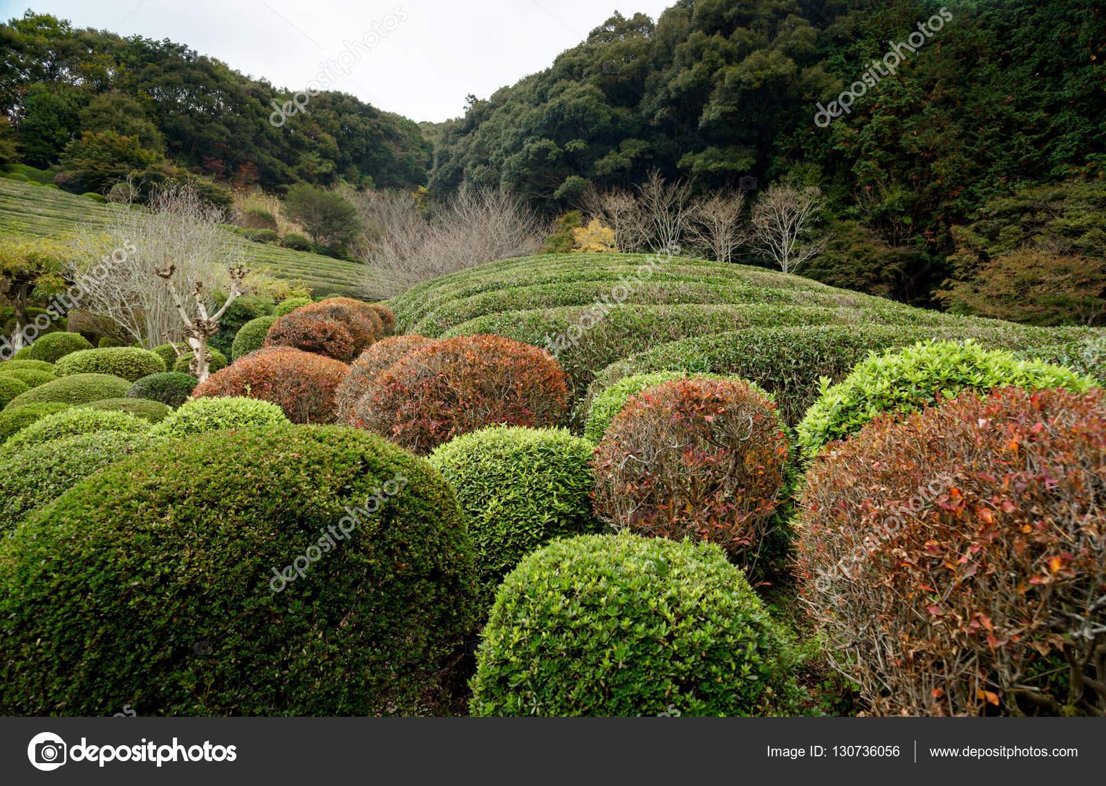 Herbst, Teebaum und Pflanzen in den japanischen Garten — Stockfoto ...