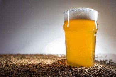 Homebrew Blonde Pint of Beer and Pislner Malt Grain over Bright Background in Studio