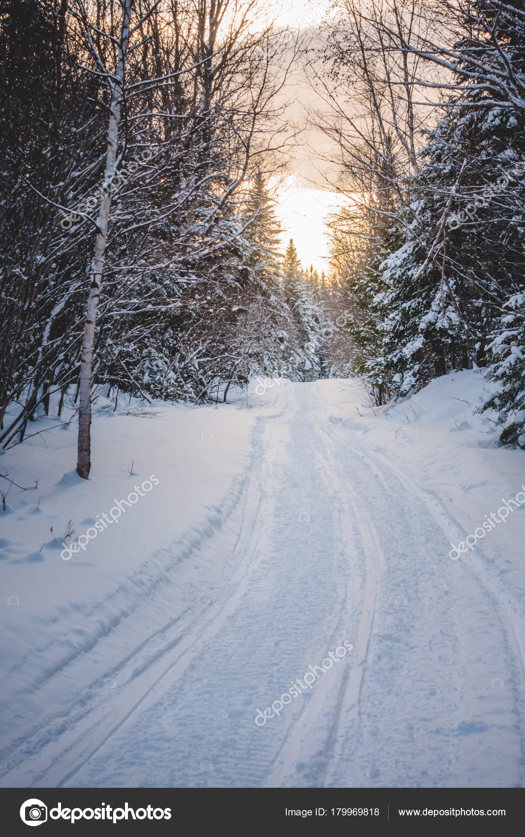 Snowmobile Tracks Wild Forest Cold Winter Sunset Quebec Canada