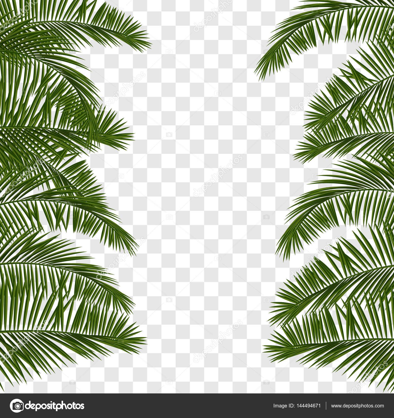 summer green palm leaf transparent stock vector helen tosh