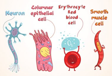 Vector illustration of human cells