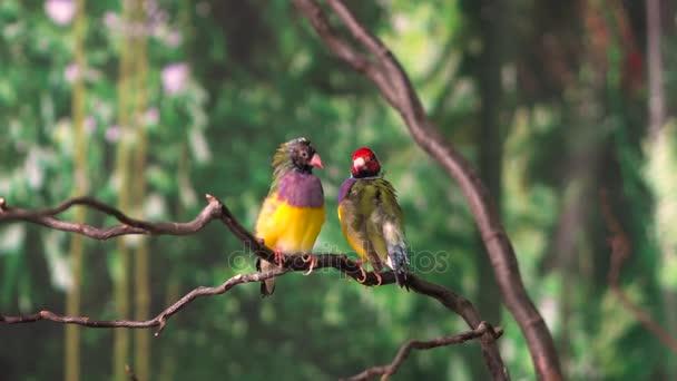 Amadin ptáci na větvi