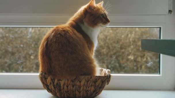 Cat Sitting Inside a Small Wicker Basket by a Window