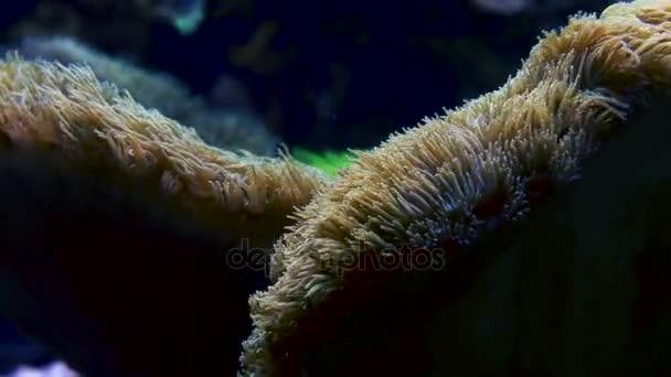 Tengeri korallok közelről