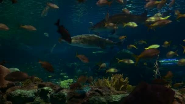 Žraloci a platýs sekáče