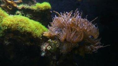 Tengeri korallok közel 4 fel
