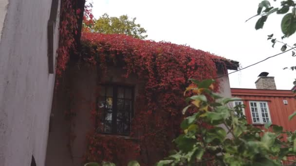 Oslo House Covered in Red Clinging Ivy
