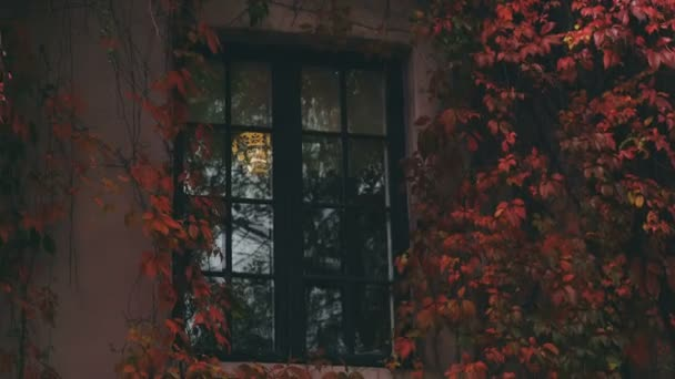 House Window and Wall Covered in Red Ivy
